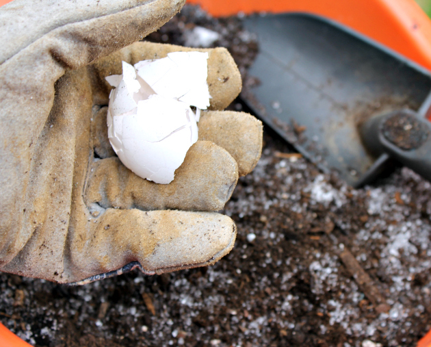 Hacks For Starting An Herb Garden eggshells