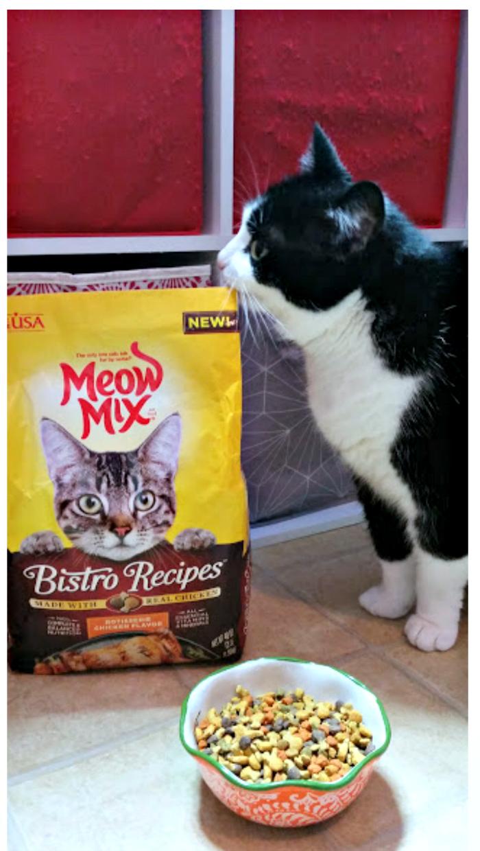 3 Ways To Celebrate Happy Healthy Cat Month Hazel