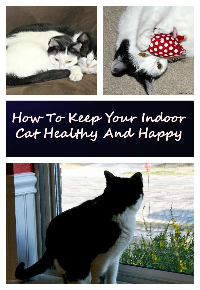Are you a cat parent?e My Meep and Hazel fill my heart with love. To keep them satisfied, I came up with these tips on how to keep your indoor cat healthy and happy #spon