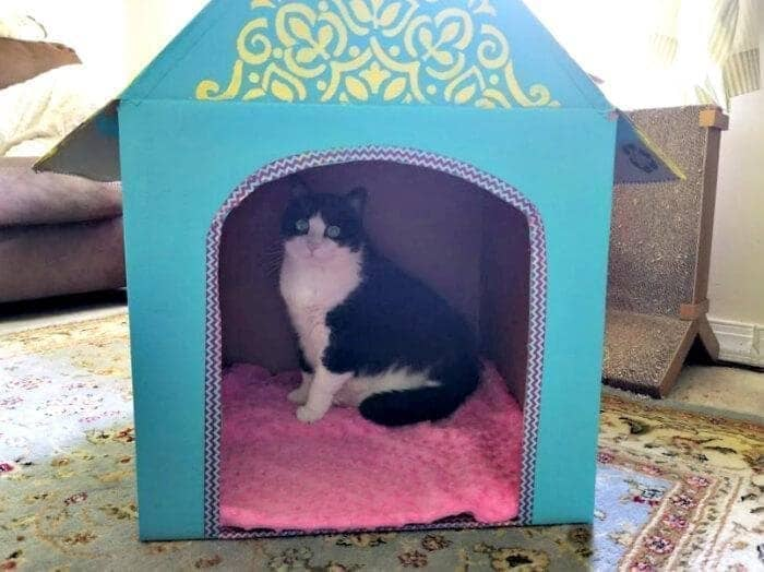 How To Make A Cat House Out Of Cardboard Boxes