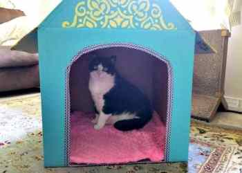 DIY Cardboard Cat House hazel fleece