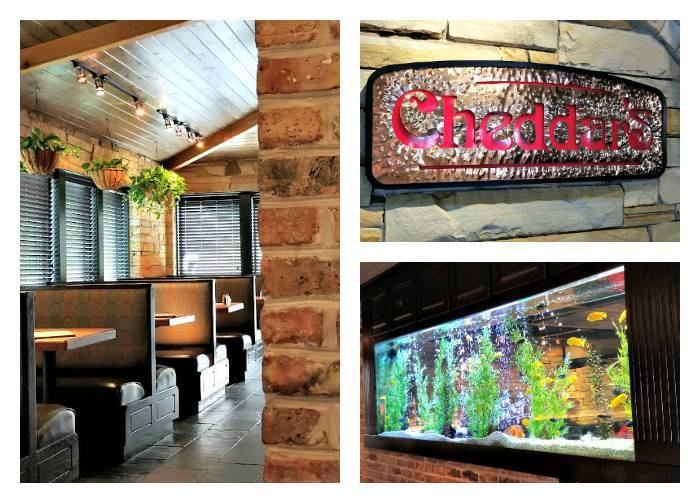 Dive Into Cheddar's Fresh Summer Menu interior