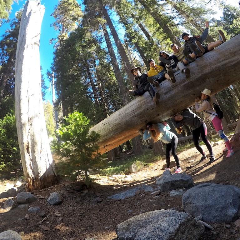 tokopah falls sequoia roadtrip