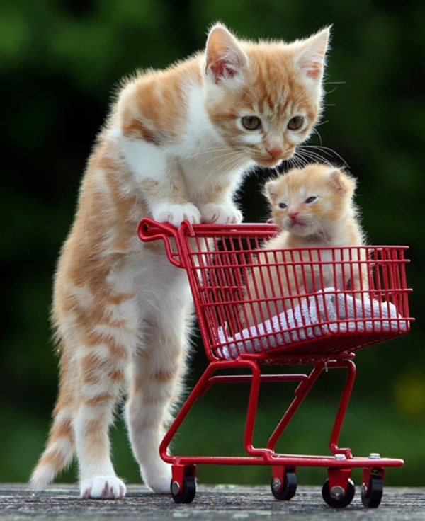 45 Animals With Their Cute Little Babies. Awesome!
