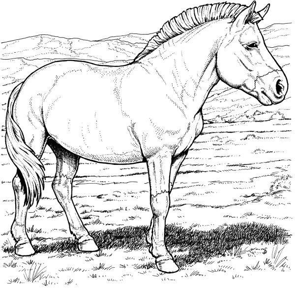 realistic horse breeds # 50