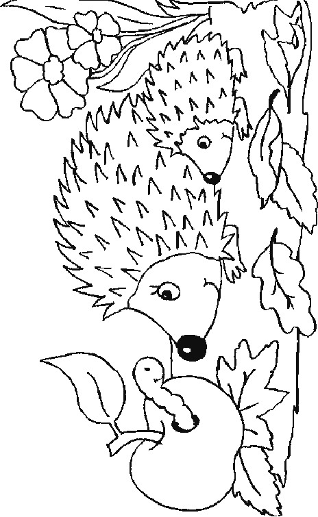 32 Coloring Pages Of Hedgehogs