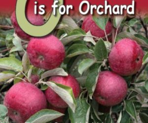 O is for Orchard