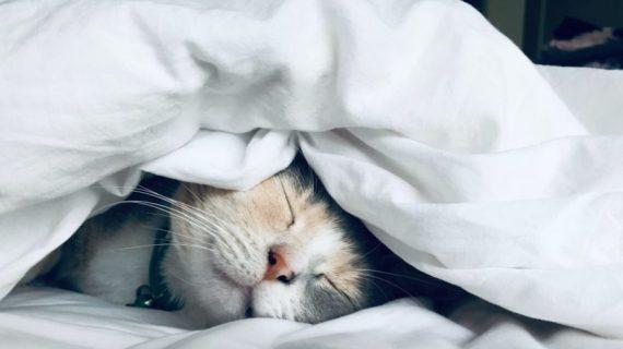 limit stress with good sleep Photo by Kate Stone Matheson on Unsplash