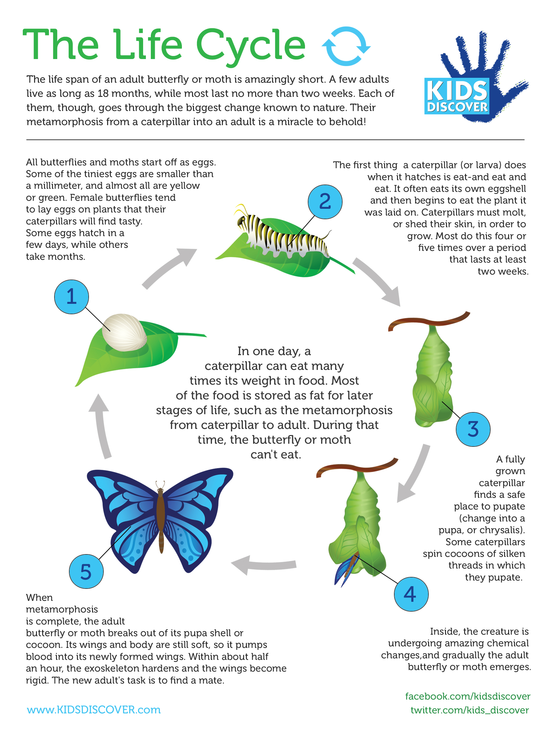 Worksheet Metamorphosis Worksheet Grass Fedjp Worksheet