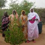 4 ladies by new tree