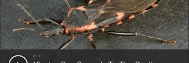 Huffington Post: Deadly 'Kissing Bug' Found In Southern States