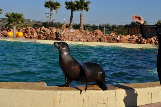 attica zoo park with kids seal