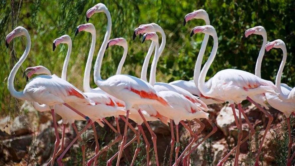 Attica Zoo Park