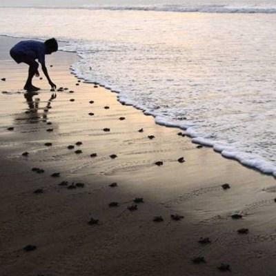 Traveling Turtles