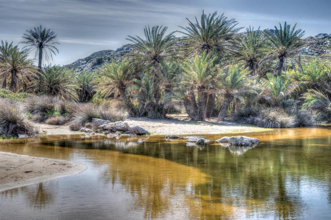 Vai palm tree forest Lassithi Crete