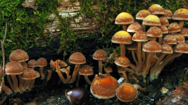 Natural History Museum of Meteora and Mushroom Museum