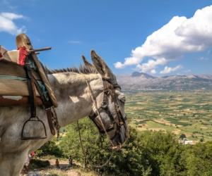 Diktaean Andron – Cave of Zeus and Lassithi Plateau Family Tour