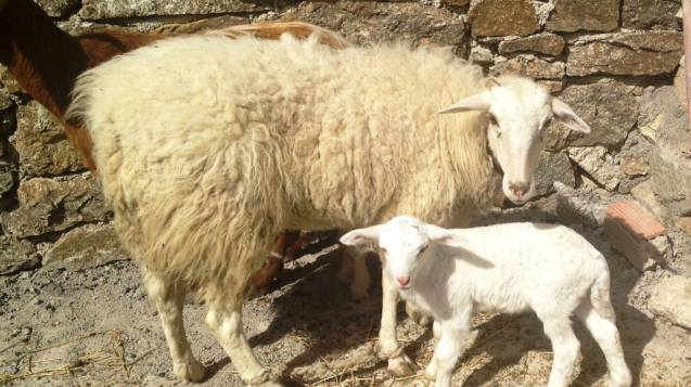 Family Visit to an Animal and Organic Farm on Mykonos