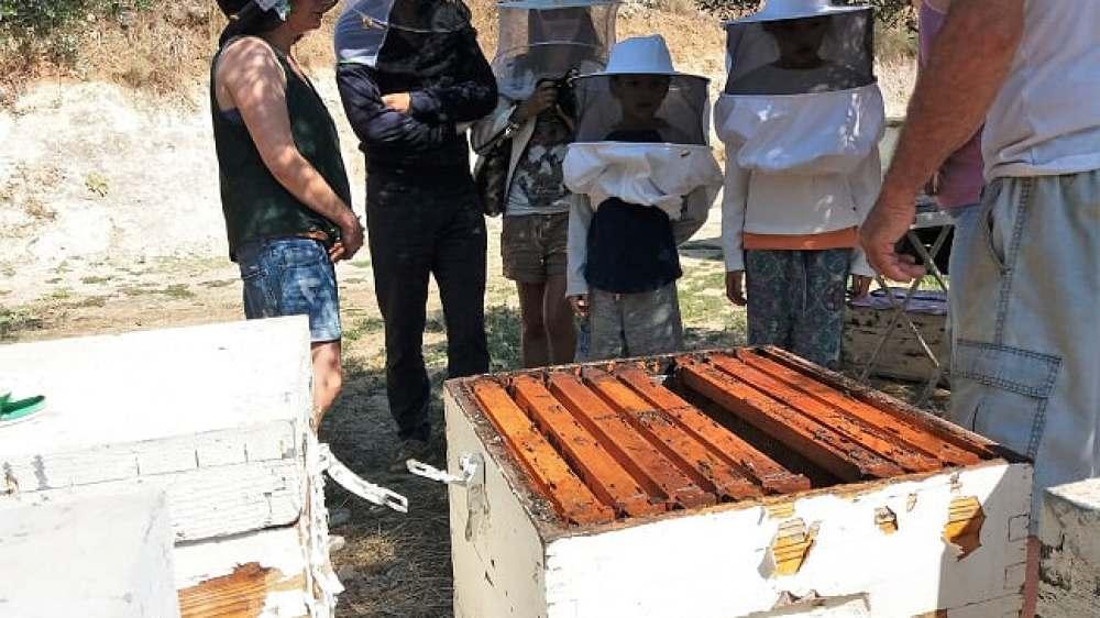 Family Visit to a Cretan Bee Garden