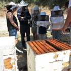 Family Visit to a Cretan Bee Garden