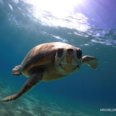 ARCHELON – The Sea Turtle Protection Society