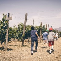Wine Tour in Crete & Wine Tasting