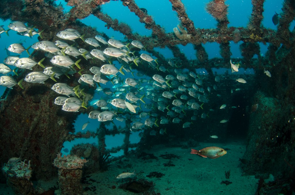 Snorkeling and diving in Greece