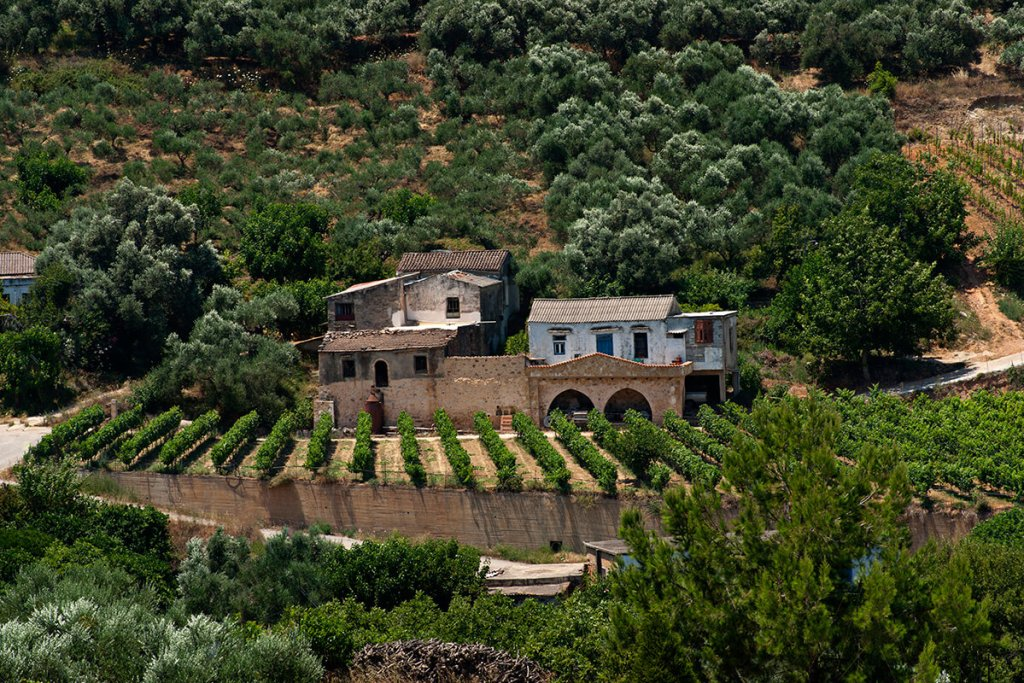 anoskeli winery vineyards-3_0