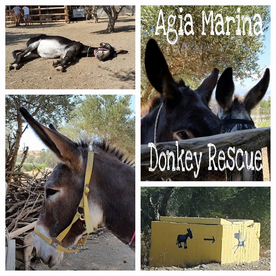 Donkey Rescue Agia Marina Crete Facebook Nera Matala