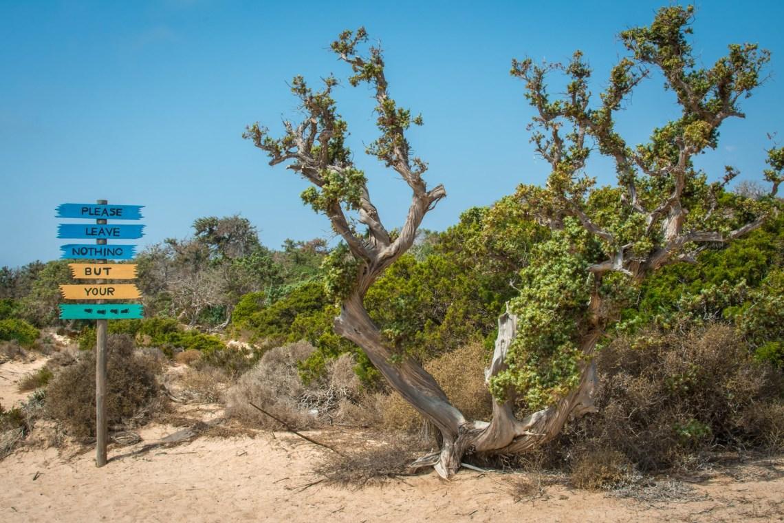 Dried up cedar tree ,white sand,blue water,beach ,Chrissi island DP-min
