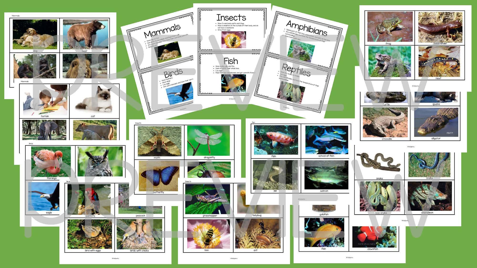 Categorizing 6 Animal Classes