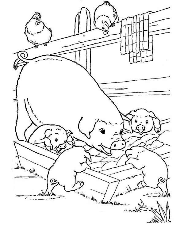 Coloring Pages Of Baby Animalom Mother Pig And Her Babies Are Eating On