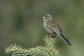 Short Stories - Sparrow