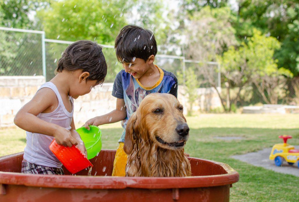 Enfants qui jouent avec des pistolets à eau avec un chien