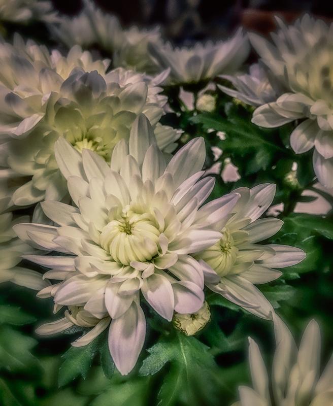 floweronmygift