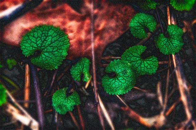 leafonground