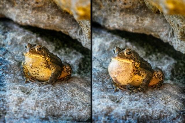frogppgpeeeeps