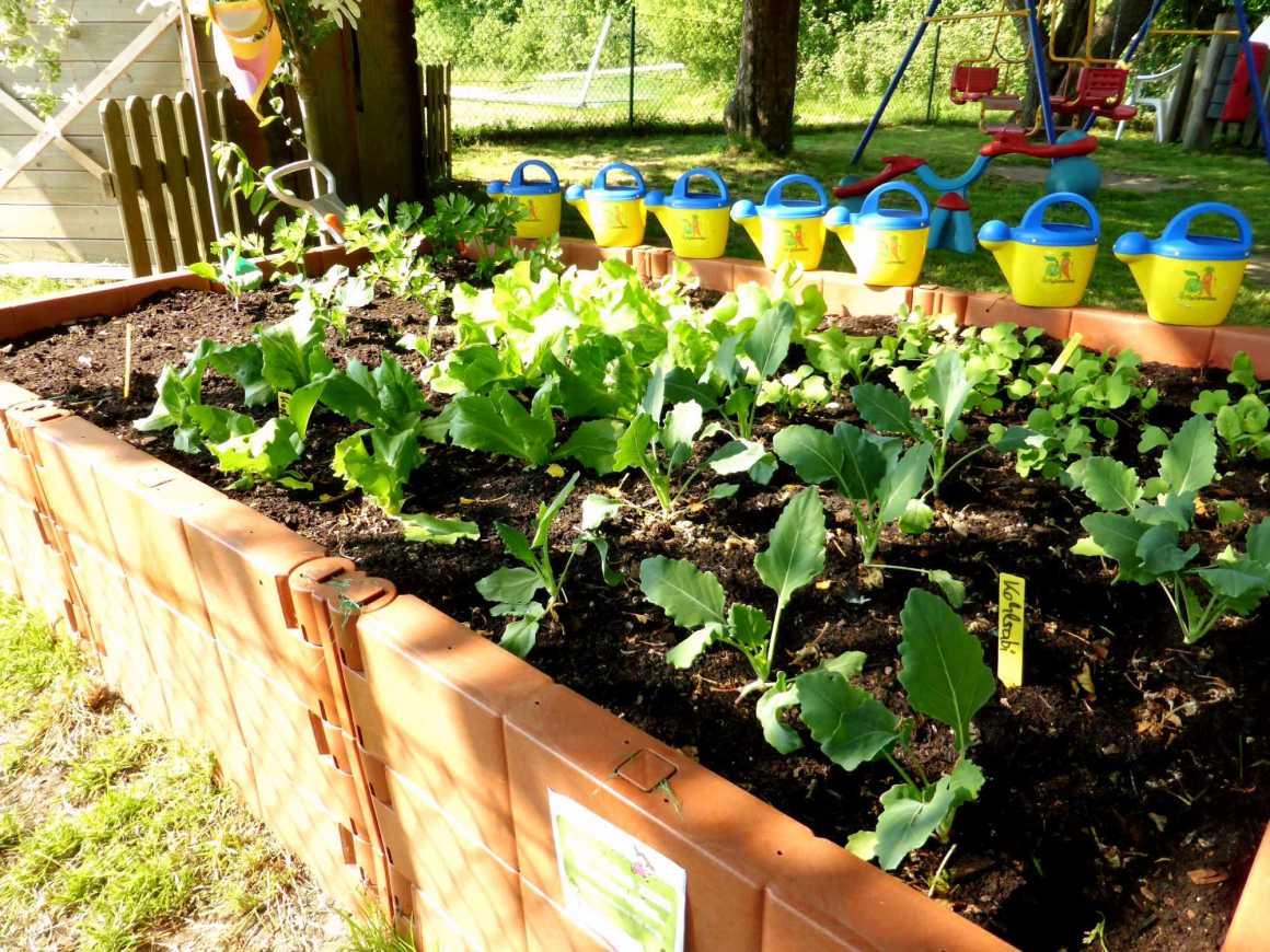 Gemüsebeet Kid Zone Kinderbetreuung 1 - Gemüsebeet für Kinder