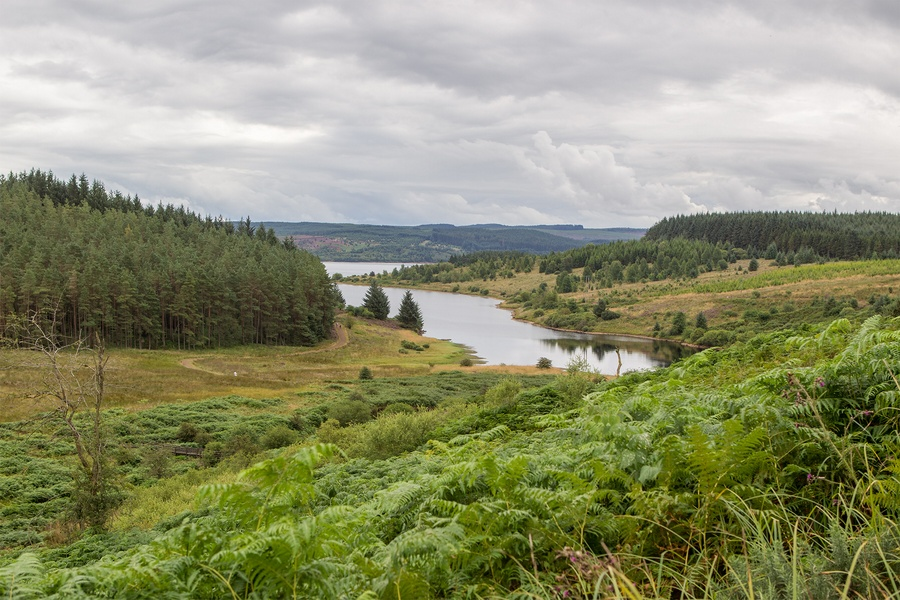 kielder_safari_aug_2017_0044