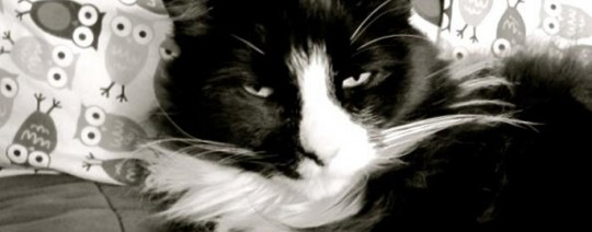 gato, Henrí, le Chat Noir