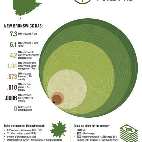 Forest NB Infographic E