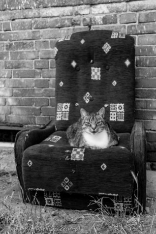 street cats of Szczecin 001
