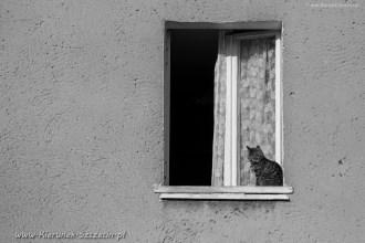 street cats of Szczecin 003