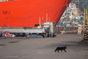 street cats of Szczecin 004