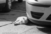 street cats of Szczecin 008