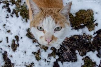 street cats of Szczecin 009