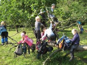 Auf Baum spielende Kinder