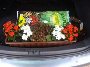 Blumen für die Haupttribüne