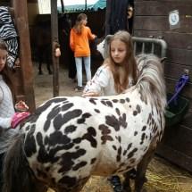 Ponyranch Arnsberg - Sommer 2016 (52)