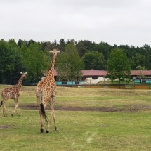 Safariland - Sommer-2019 - KiJu Neheim (11)